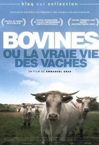 bovines couv